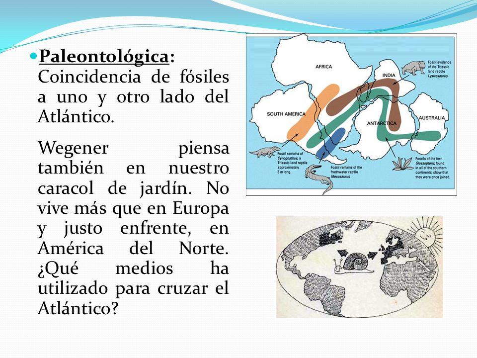 Paleontológica: Coincidencia de fósiles a uno y otro lado del Atlántico.