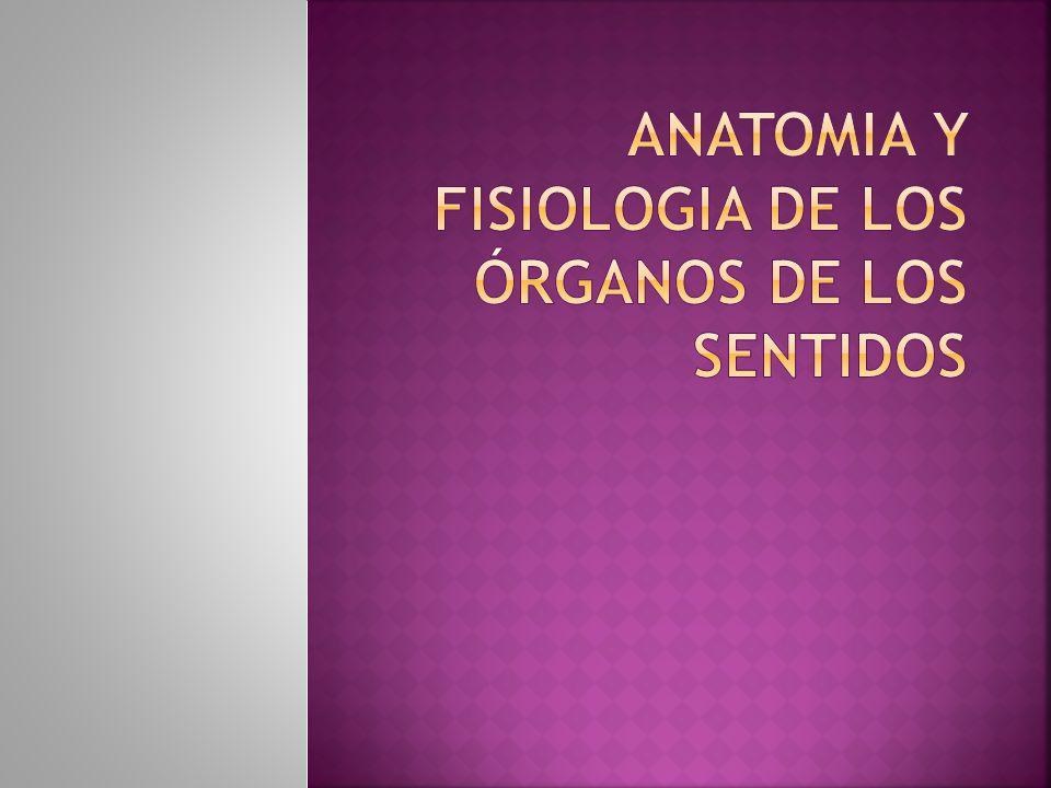 ANATOMIA Y FISIOLOGIA DE LOS ÓRGANOS DE LOS SENTIDOS