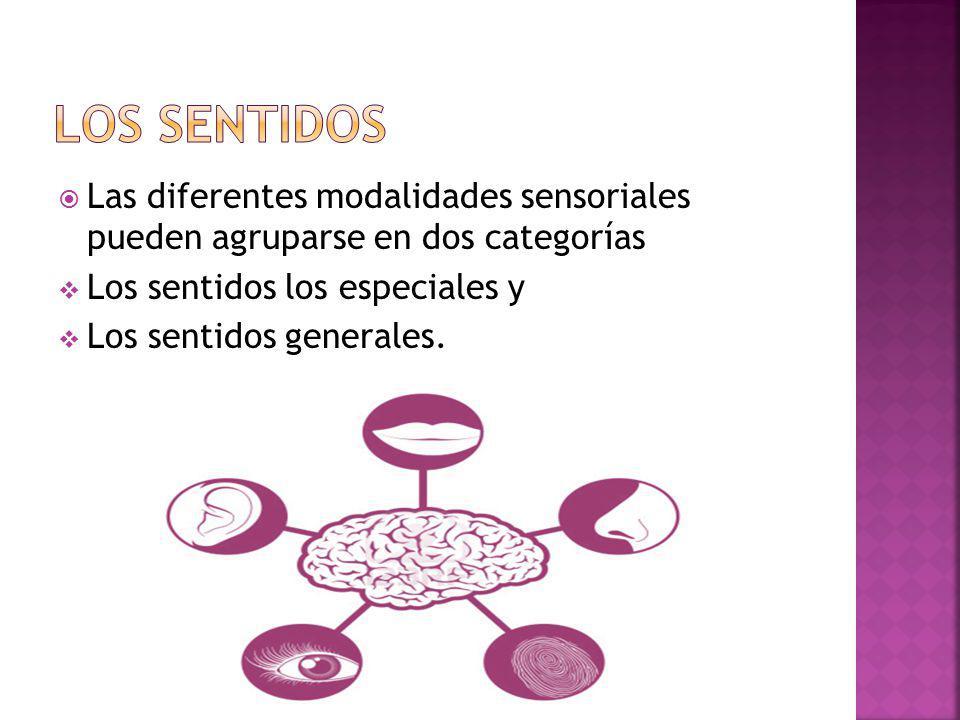 LOS SENTIDOS Las diferentes modalidades sensoriales pueden agruparse en dos categorías. Los sentidos los especiales y.