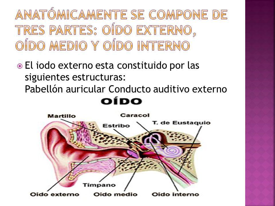Anatómicamente se compone de tres partes: oído externo, oído medio y oído interno
