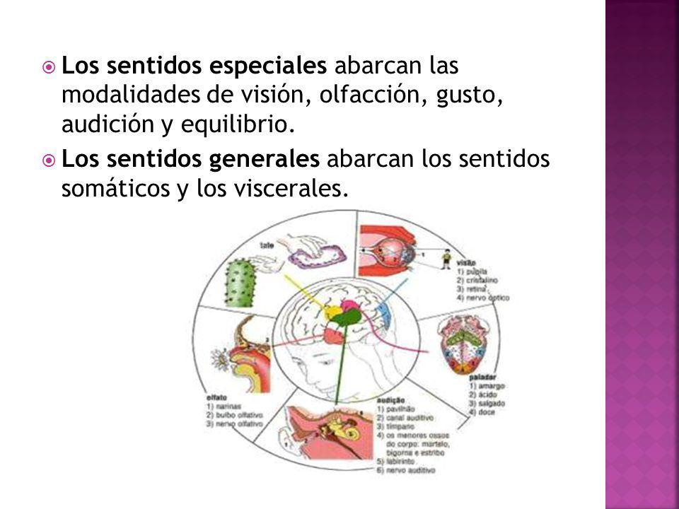 Los sentidos especiales abarcan las modalidades de visión, olfacción, gusto, audición y equilibrio.
