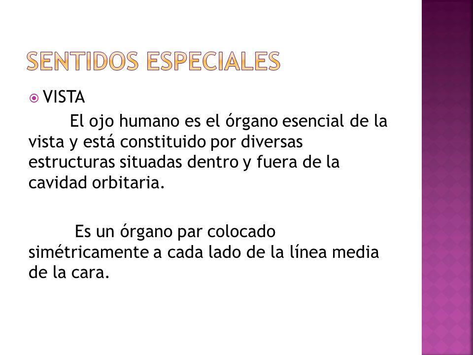 SENTIDOS ESPECIALES VISTA