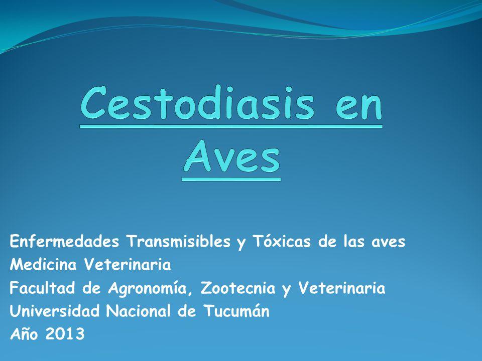 Cestodiasis en Aves Enfermedades Transmisibles y Tóxicas de las aves