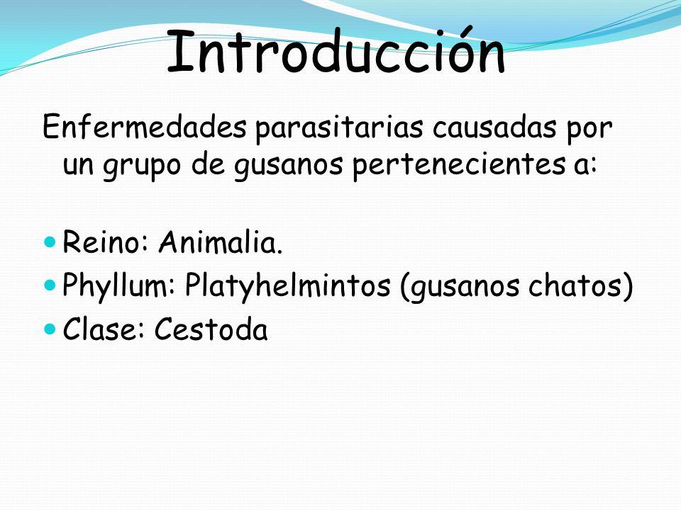 Introducción Enfermedades parasitarias causadas por un grupo de gusanos pertenecientes a: Reino: Animalia.