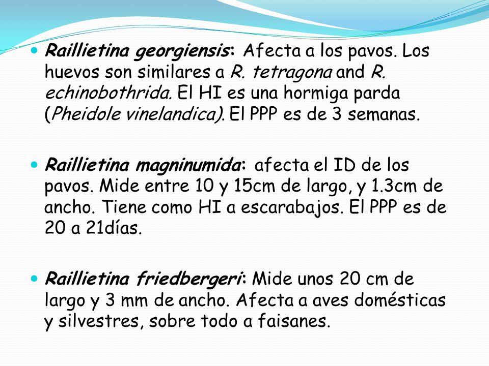 Raillietina georgiensis: Afecta a los pavos