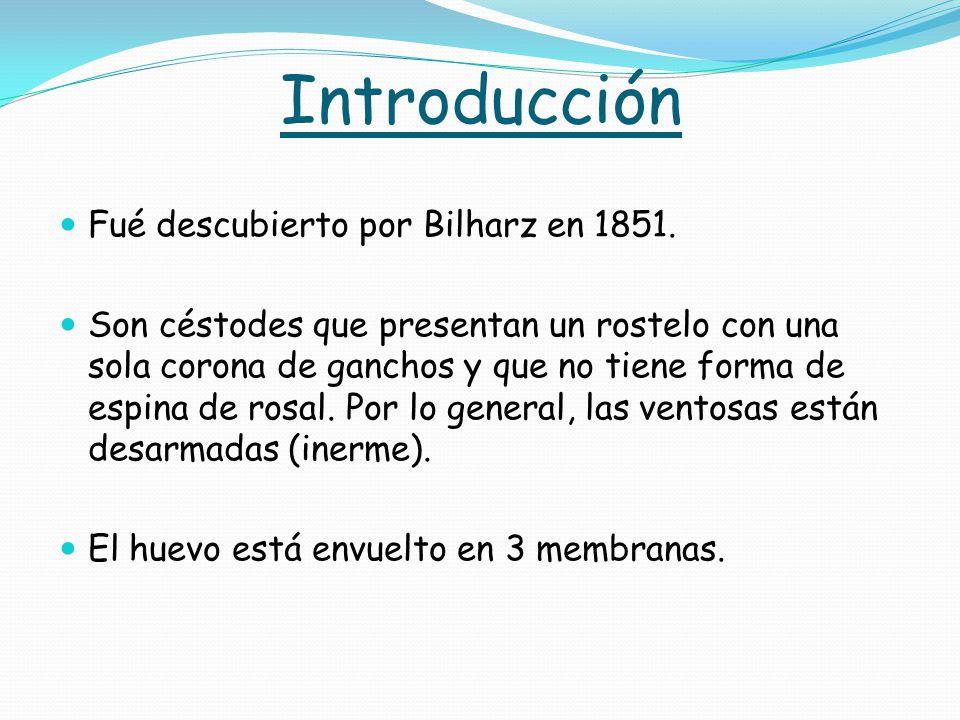 Introducción Fué descubierto por Bilharz en 1851.