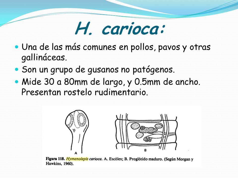 H. carioca: Una de las más comunes en pollos, pavos y otras gallináceas. Son un grupo de gusanos no patógenos.
