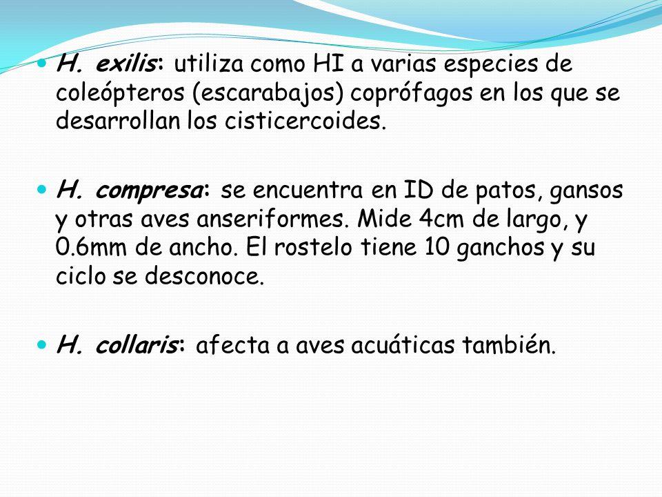 H. exilis: utiliza como HI a varias especies de coleópteros (escarabajos) coprófagos en los que se desarrollan los cisticercoides.