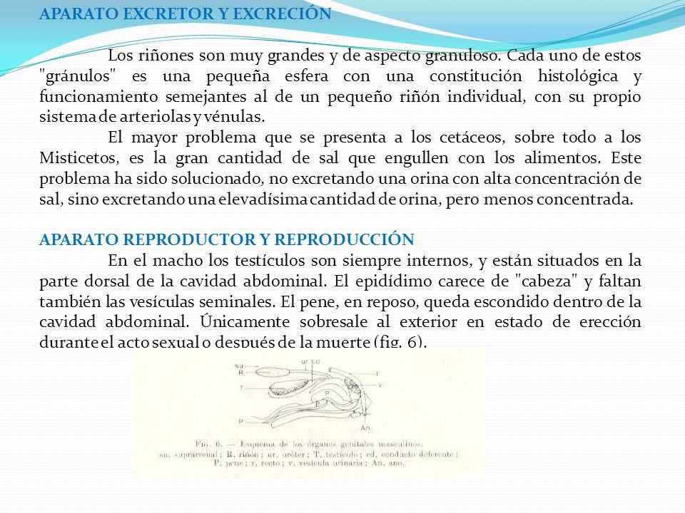 APARATO EXCRETOR Y EXCRECIÓN