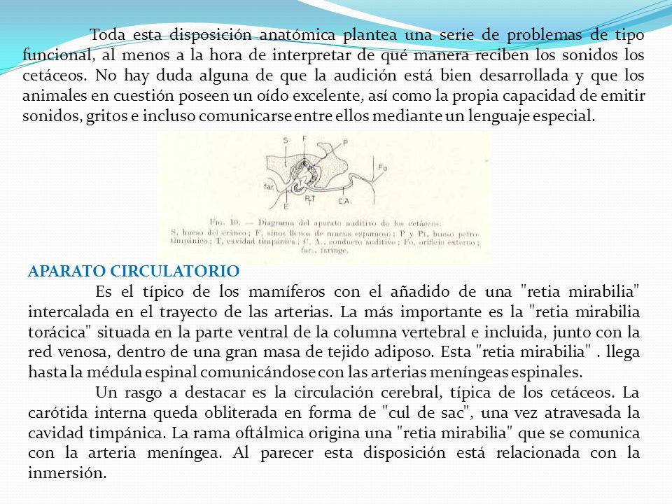 Vistoso Anatomía De Mamíferos Marinos Patrón - Imágenes de Anatomía ...