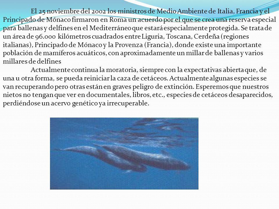 El 25 noviembre del 2002 los ministros de Medio Ambiente de Italia, Francia y el Principado de Mónaco firmaron en Roma un acuerdo por el que se crea una reserva especial para ballenas y delfines en el Mediterráneo que estará especialmente protegida. Se trata de un área de 96.000 kilómetros cuadrados entre Liguria, Toscana, Cerdeña (regiones italianas), Principado de Mónaco y la Provenza (Francia), donde existe una importante población de mamíferos acuáticos, con aproximadamente un millar de ballenas y varios millares de delfines