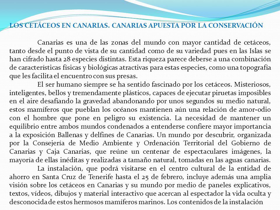 LOS CETÁCEOS EN CANARIAS. CANARIAS APUESTA POR LA CONSERVACIÓN