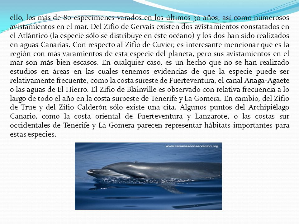 ello, los más de 80 especímenes varados en los últimos 30 años, así como numerosos avistamientos en el mar.