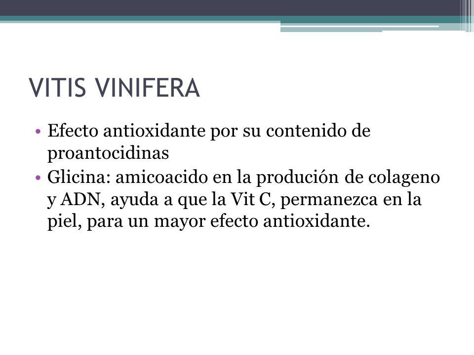 VITIS VINIFERA Efecto antioxidante por su contenido de proantocidinas