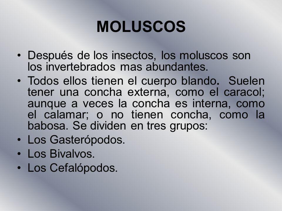 MOLUSCOS Después de los insectos, los moluscos son los invertebrados mas abundantes.