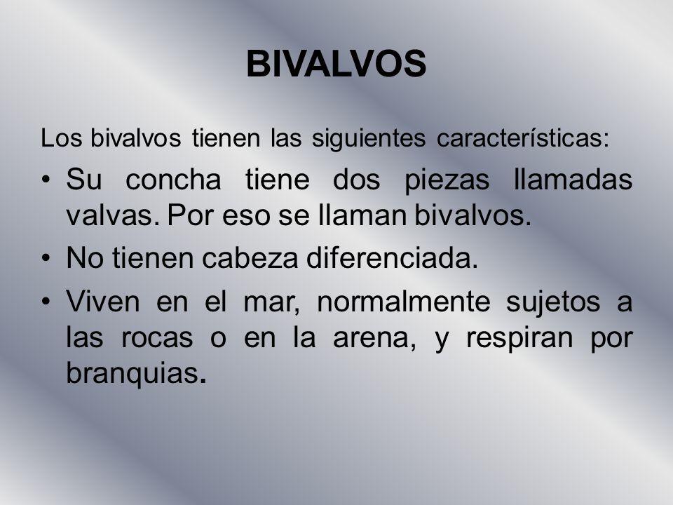 BIVALVOS Los bivalvos tienen las siguientes características: Su concha tiene dos piezas llamadas valvas. Por eso se llaman bivalvos.