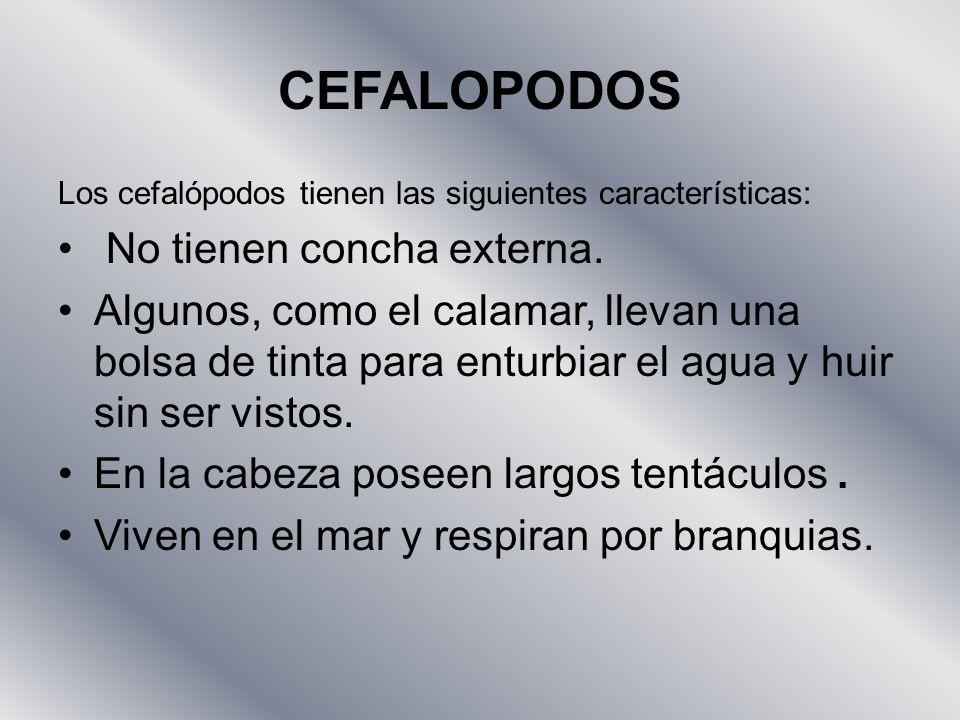 CEFALOPODOS No tienen concha externa.