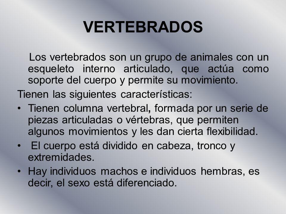 VERTEBRADOS Los vertebrados son un grupo de animales con un esqueleto interno articulado, que actúa como soporte del cuerpo y permite su movimiento.