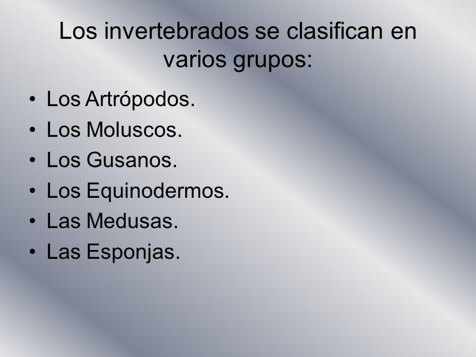 Los invertebrados se clasifican en varios grupos:
