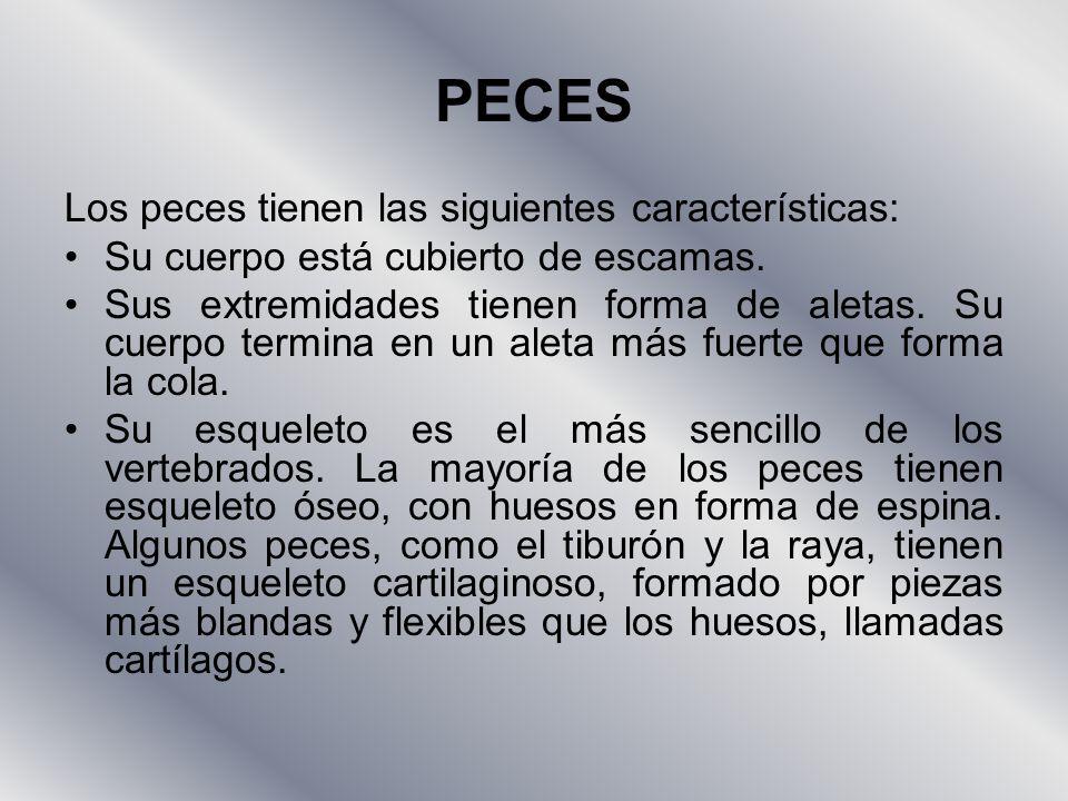 PECES Los peces tienen las siguientes características: