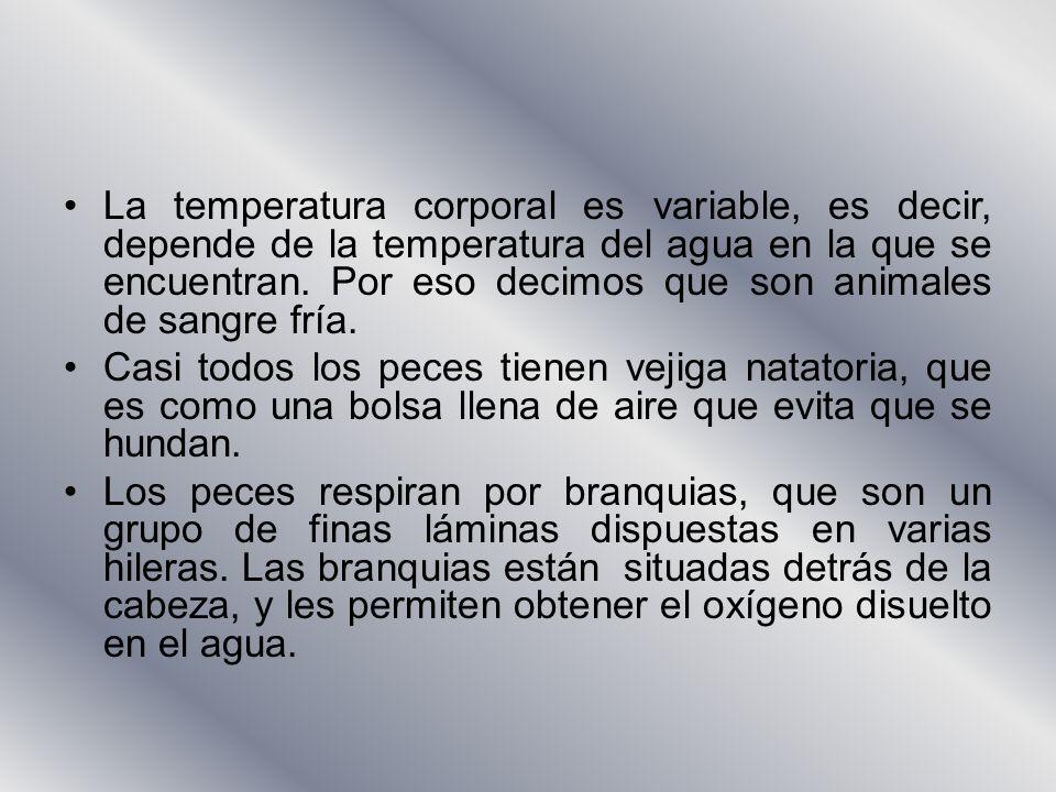 La temperatura corporal es variable, es decir, depende de la temperatura del agua en la que se encuentran. Por eso decimos que son animales de sangre fría.