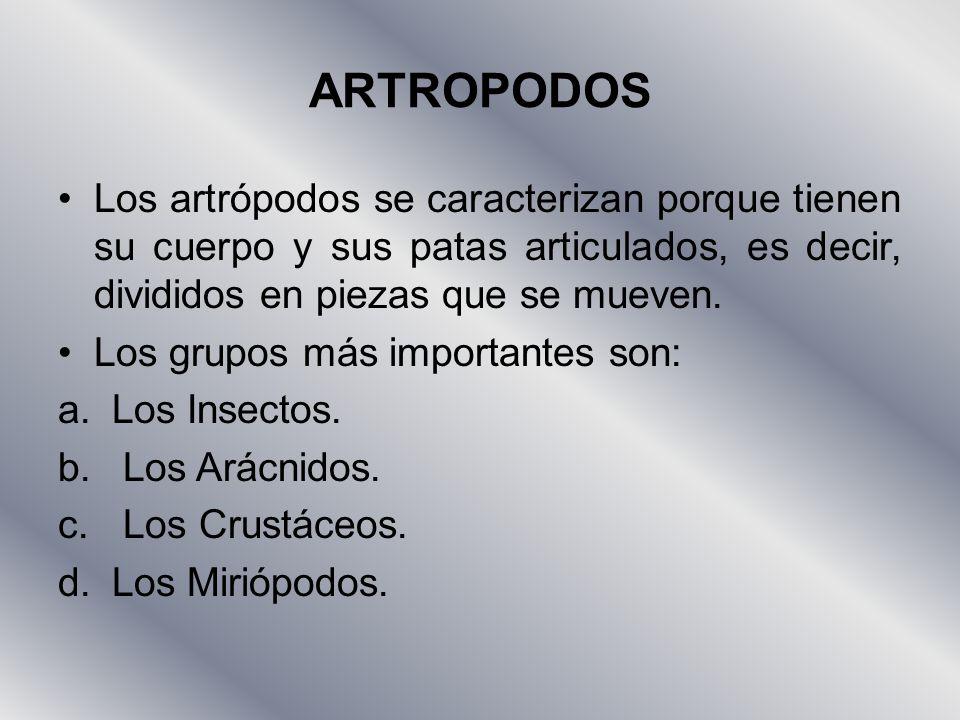 ARTROPODOS Los artrópodos se caracterizan porque tienen su cuerpo y sus patas articulados, es decir, divididos en piezas que se mueven.