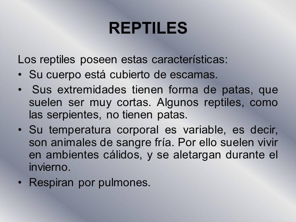 REPTILES Los reptiles poseen estas características: