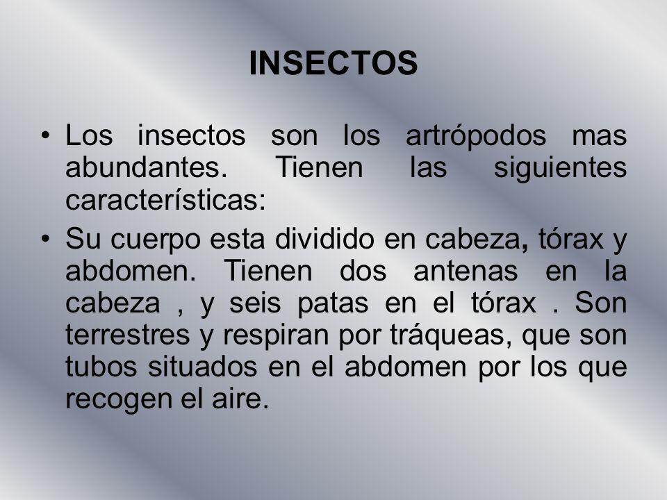 INSECTOS Los insectos son los artrópodos mas abundantes. Tienen las siguientes características: