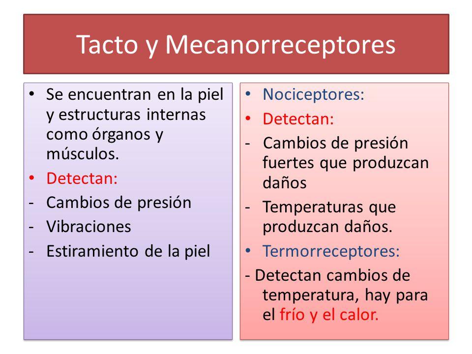 Tacto y Mecanorreceptores