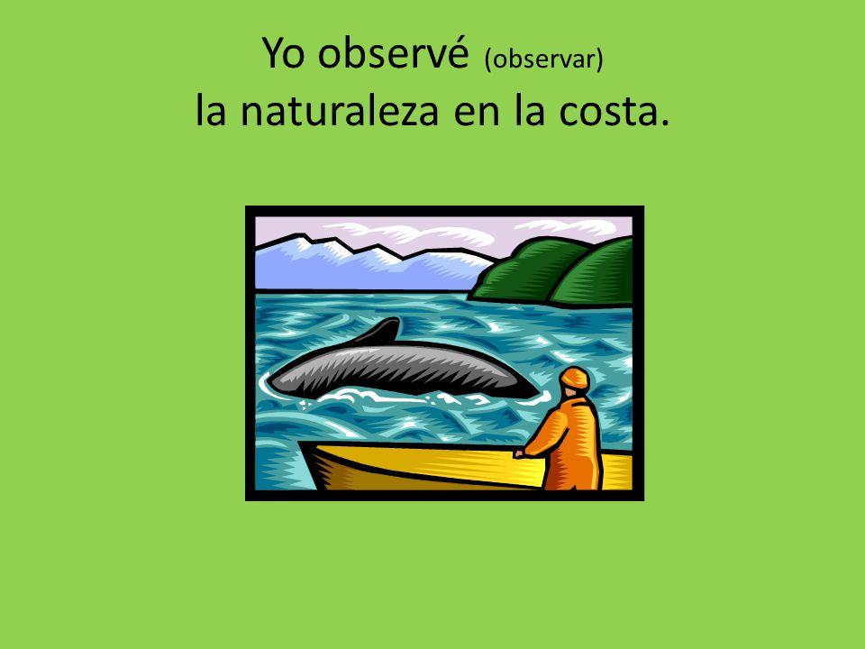 Yo observé (observar) la naturaleza en la costa.
