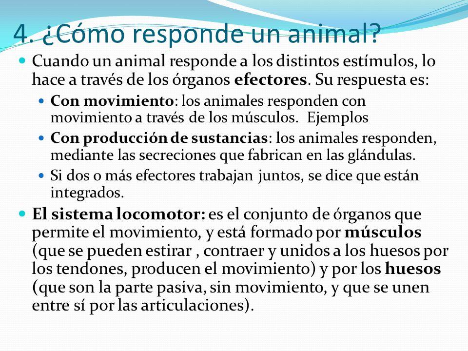 4. ¿Cómo responde un animal