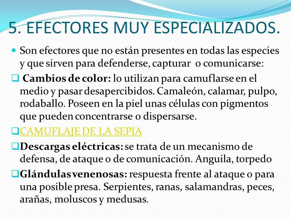 5. EFECTORES MUY ESPECIALIZADOS.