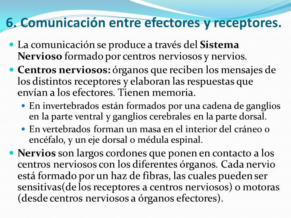 6. Comunicación entre efectores y receptores.