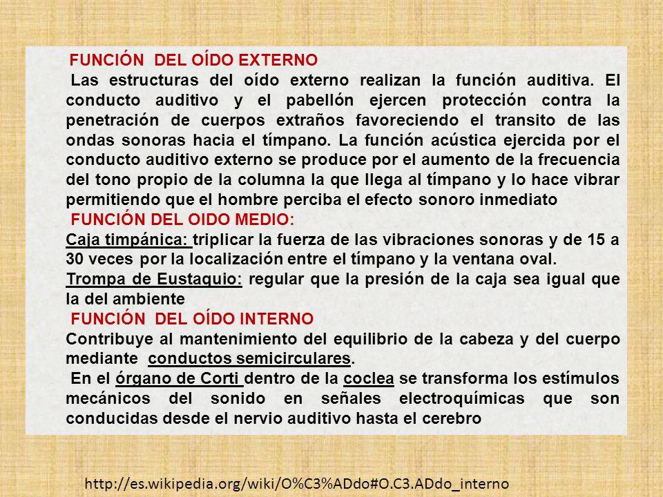 FUNCIÓN DEL OÍDO EXTERNO