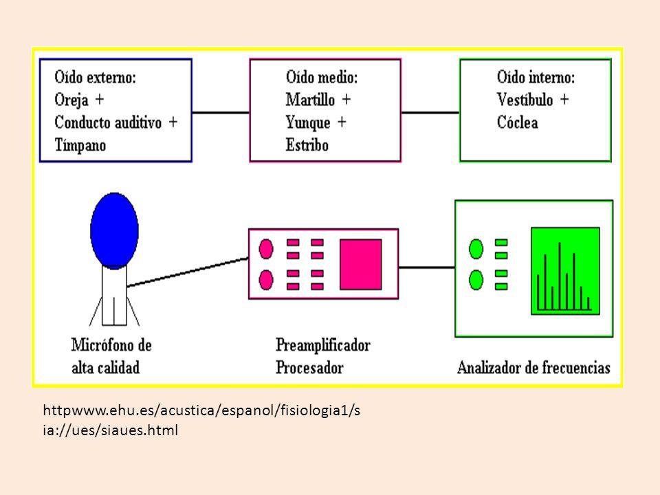 httpwww.ehu.es/acustica/espanol/fisiologia1/sia://ues/siaues.html
