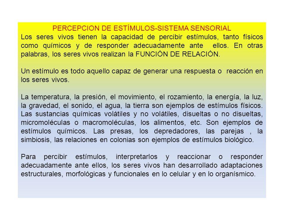 PERCEPCION DE ESTÍMULOS-SISTEMA SENSORIAL