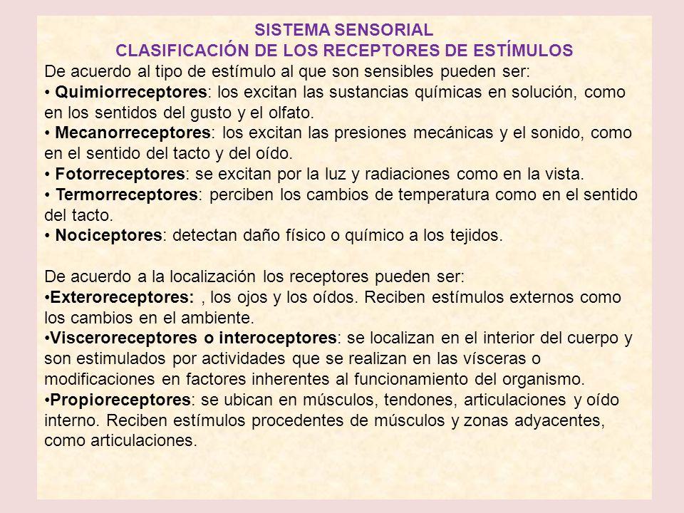 CLASIFICACIÓN DE LOS RECEPTORES DE ESTÍMULOS