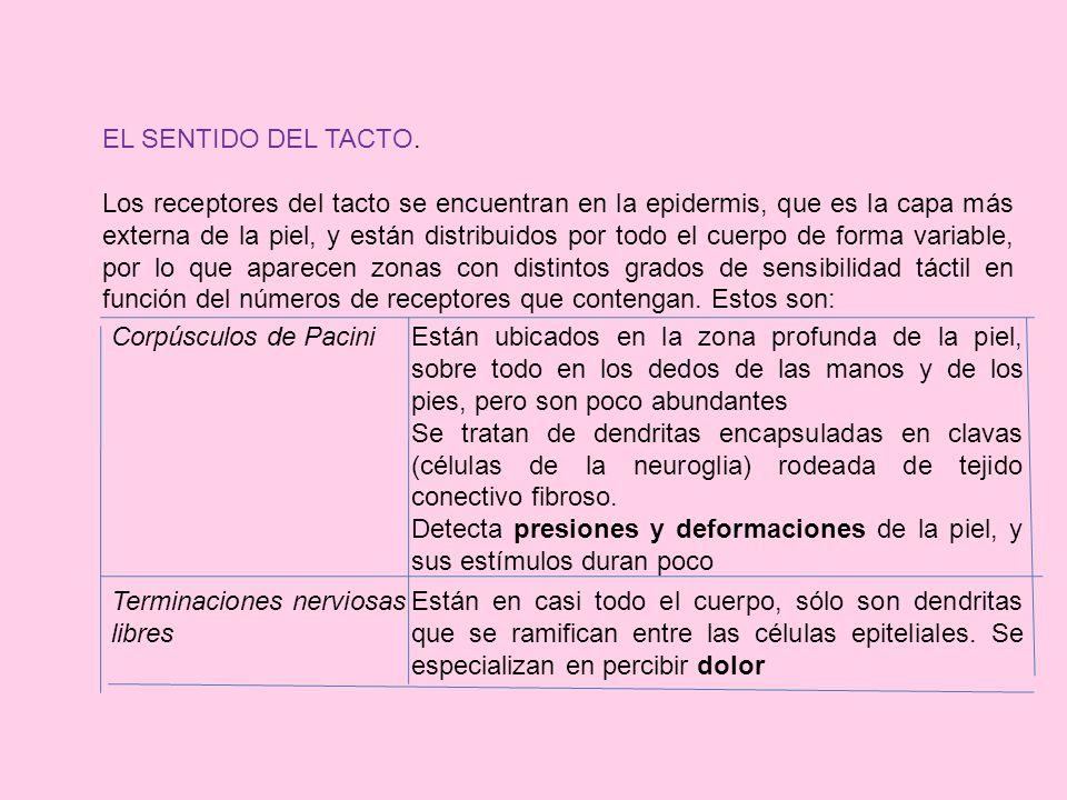 EL SENTIDO DEL TACTO.