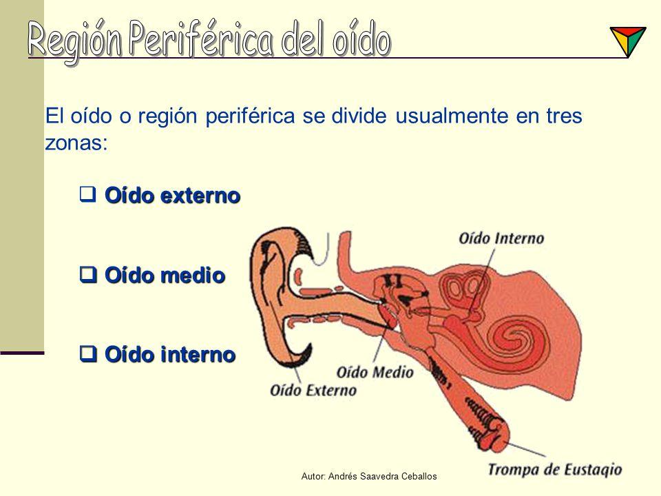 Región Periférica del oído
