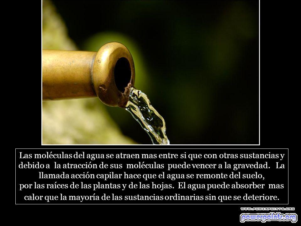 Las moléculas del agua se atraen mas entre si que con otras sustancias y debido a la atracción de sus moléculas puede vencer a la gravedad.