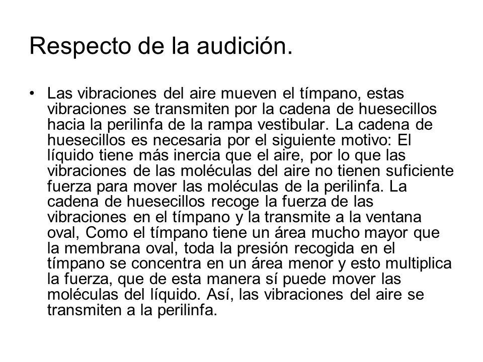 Respecto de la audición.