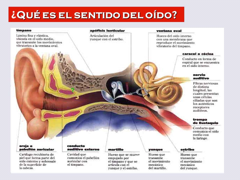 ¿Qué es el sentido del oído