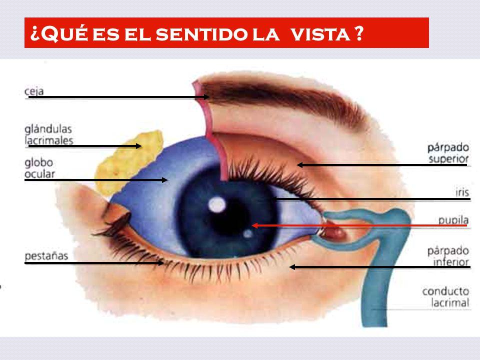 ¿Qué es el sentido la vista