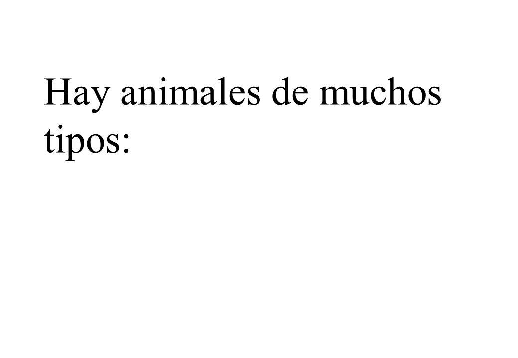 Hay animales de muchos tipos: