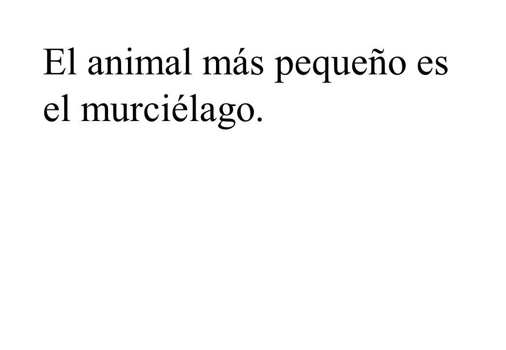 El animal más pequeño es el murciélago.