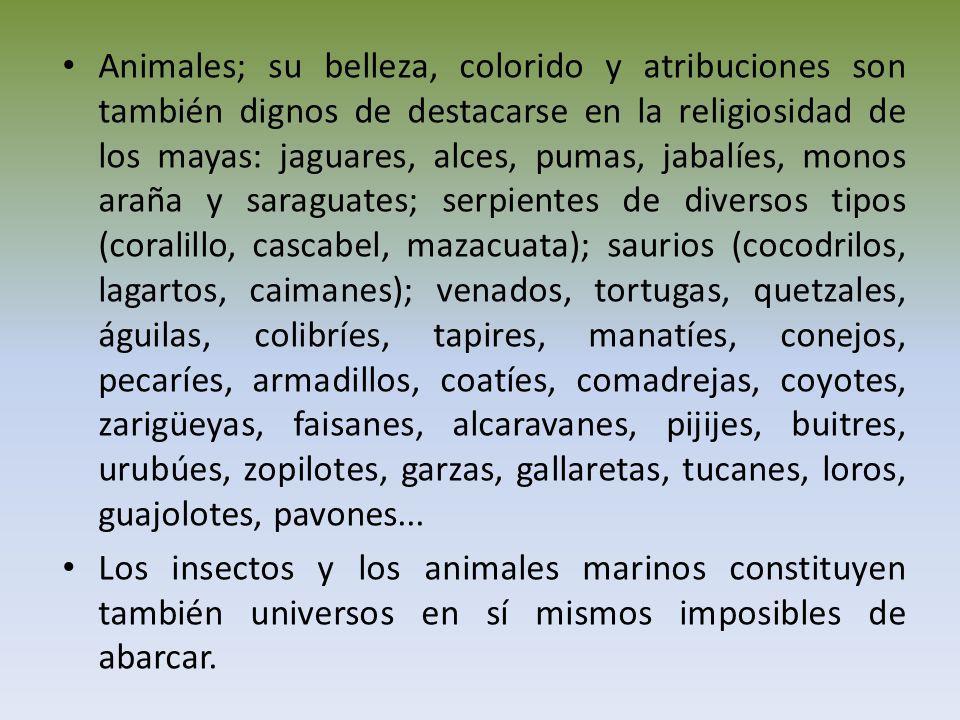 Animales; su belleza, colorido y atribuciones son también dignos de destacarse en la religiosidad de los mayas: jaguares, alces, pumas, jabalíes, monos araña y saraguates; serpientes de diversos tipos (coralillo, cascabel, mazacuata); saurios (cocodrilos, lagartos, caimanes); venados, tortugas, quetzales, águilas, colibríes, tapires, manatíes, conejos, pecaríes, armadillos, coatíes, comadrejas, coyotes, zarigüeyas, faisanes, alcaravanes, pijijes, buitres, urubúes, zopilotes, garzas, gallaretas, tucanes, loros, guajolotes, pavones...