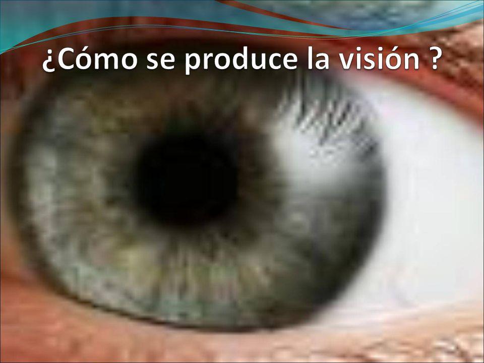 ¿Cómo se produce la visión
