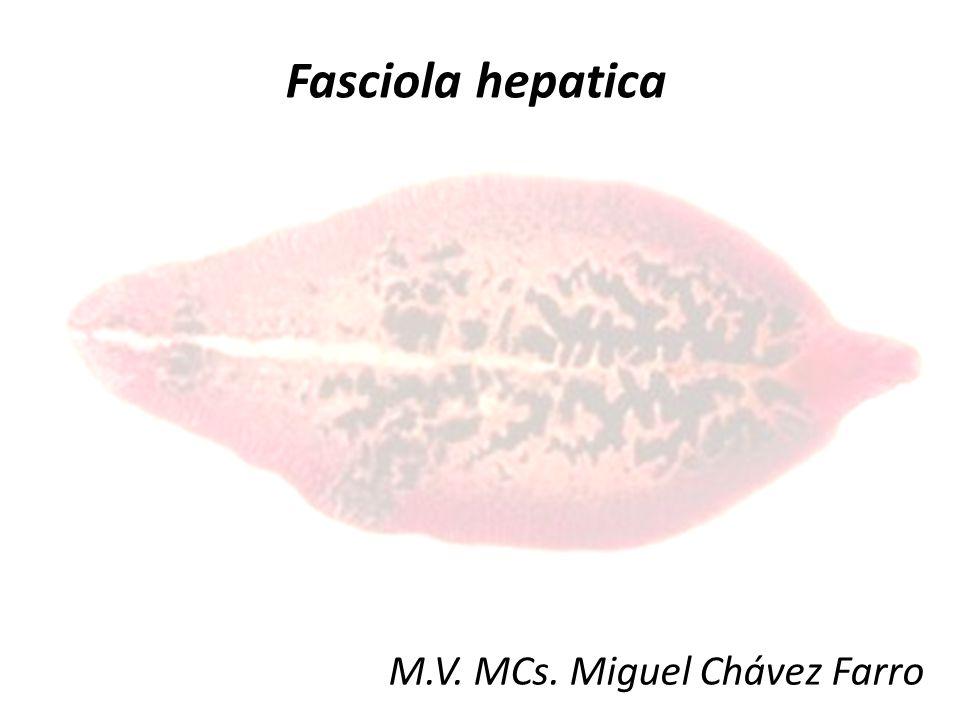 M.V. MCs. Miguel Chávez Farro