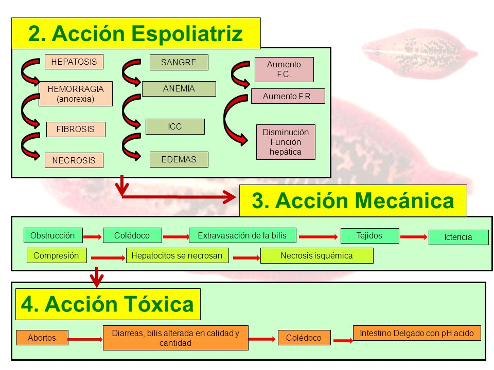 2. Acción Espoliatriz 3. Acción Mecánica 4. Acción Tóxica