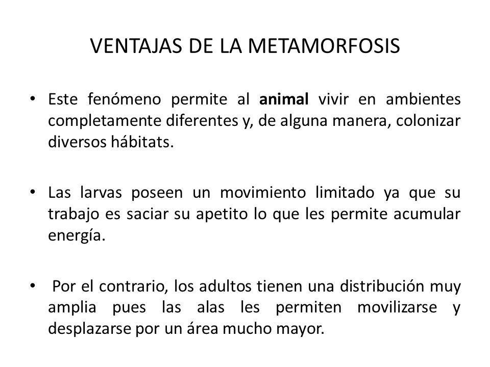 VENTAJAS DE LA METAMORFOSIS